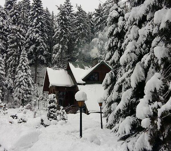 Білосніжна зима в готелі «Лісовий маєток»