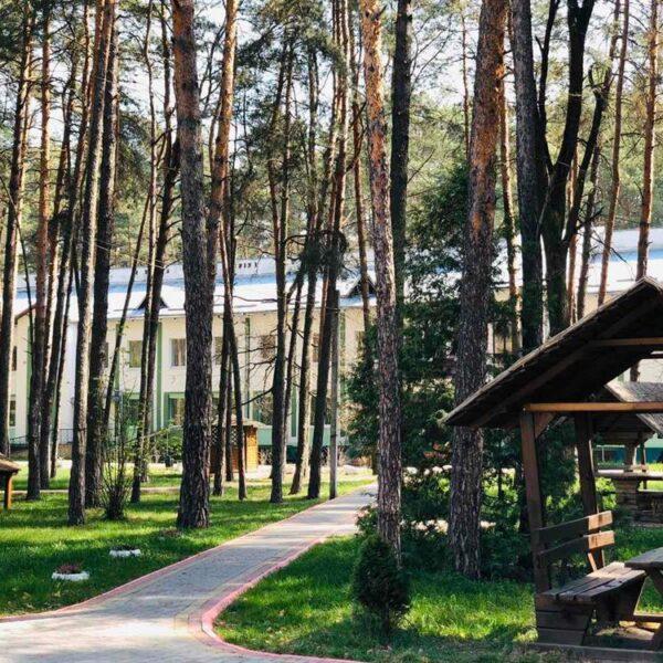 Сосновий ліс в санаторії Пролісок