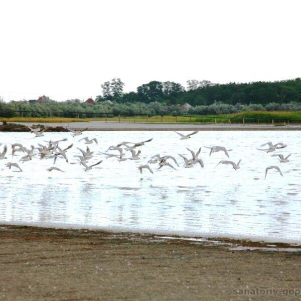 Чайки в санатории Гопри Херсонская область