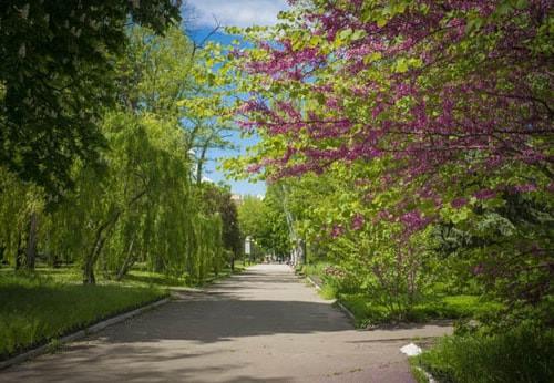 Зелена територія санаторія Лермонтовський фото